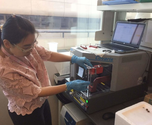 Yao uses the sonicator to fragment the DNA to small fragments